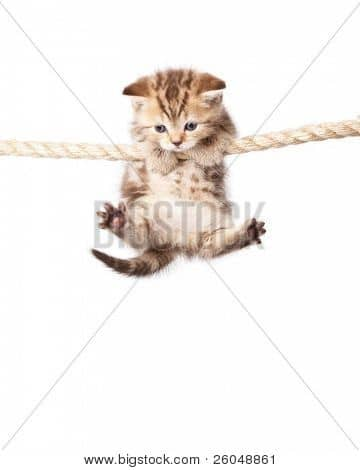 cute animal photo Bigstock