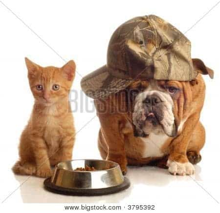 funny cat and dog stock photo
