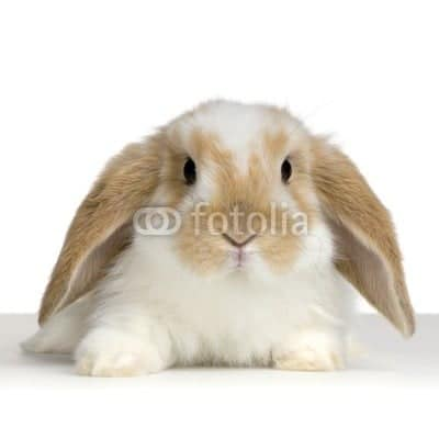 cute animal photos from Fotolia