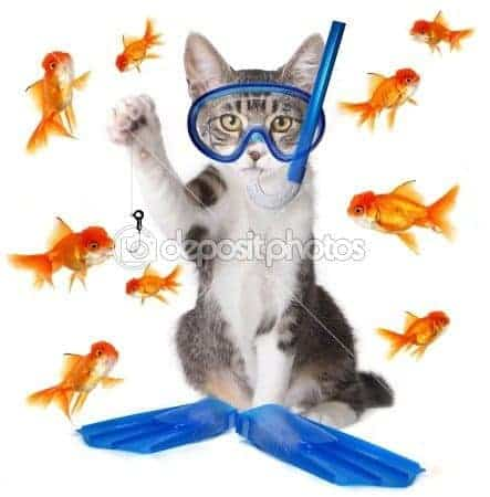 funny cat with fish stock photo