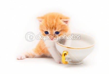 funny kitten with a tea cup