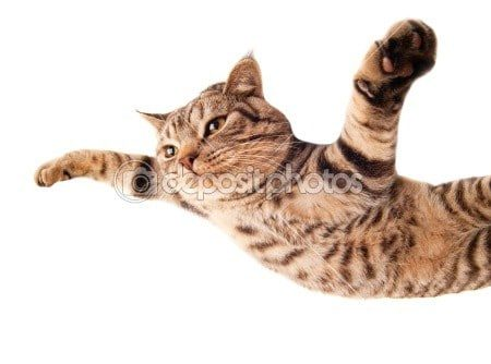 Funny flying cat photo