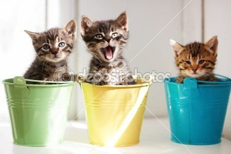funny kitten stock photos