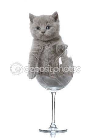 funny cat in a wine glass stock photo