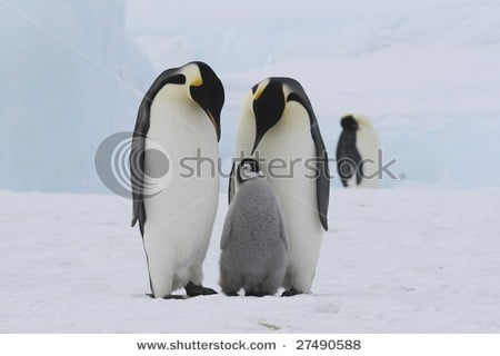 cute animal stock photos Shutterstock