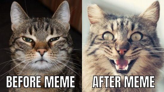 Meme Using Canva > Stock Photo Memes - Your Funny Photo Meme