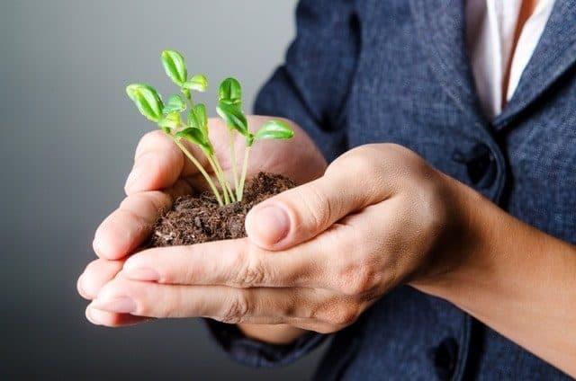 Businesswoman Plant Crop