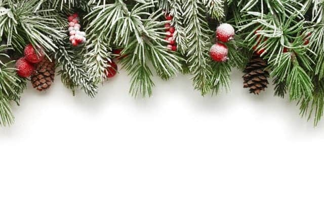 Adobe Stock Most Downloaded Christmas Tree Branches Background