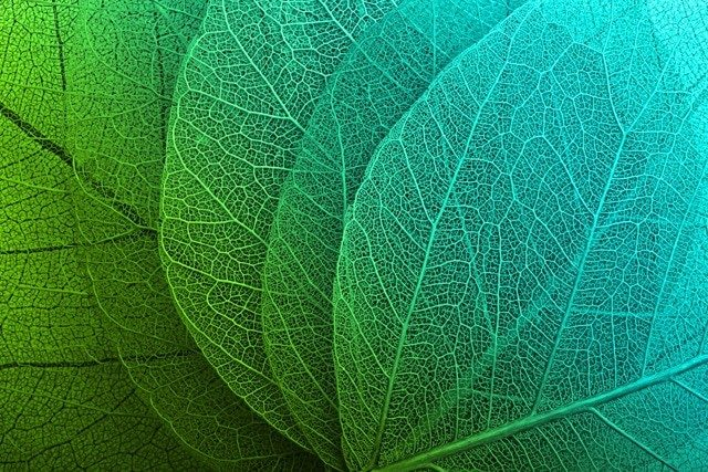 Depositphotos Most Downloaded Leaves Pattern Macro Background