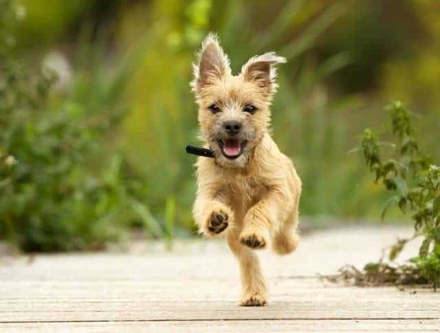 Depositphotos Most Downloaded Puppy Running