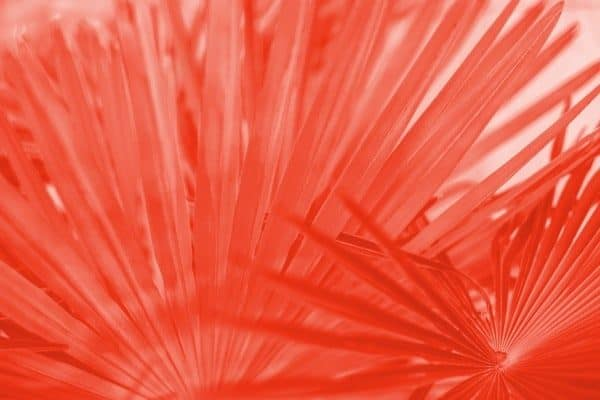 Living Coral Palm Texture