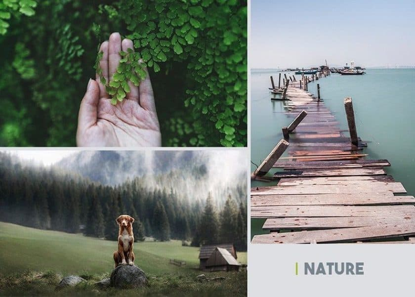 authentic stock photography nature > Depositphotos Celebrates 100 Million Files Milestone and Shares Trendy Insights