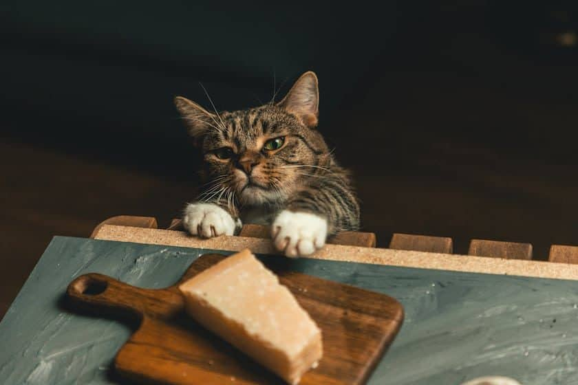 Cat reaches for cheese on wooden board