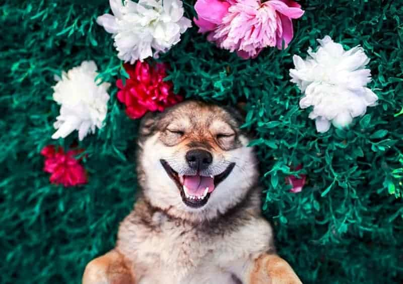 Cute dog laying on grass with flowers