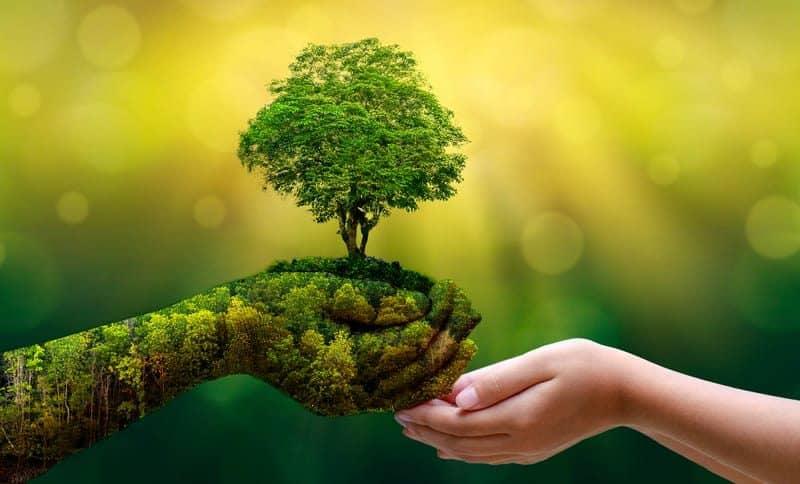 Strom v rukou