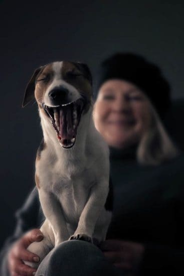 Dog yawning with smiling woman in the background