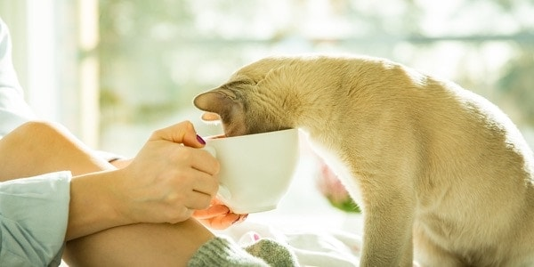 cat sniffing coffee cup