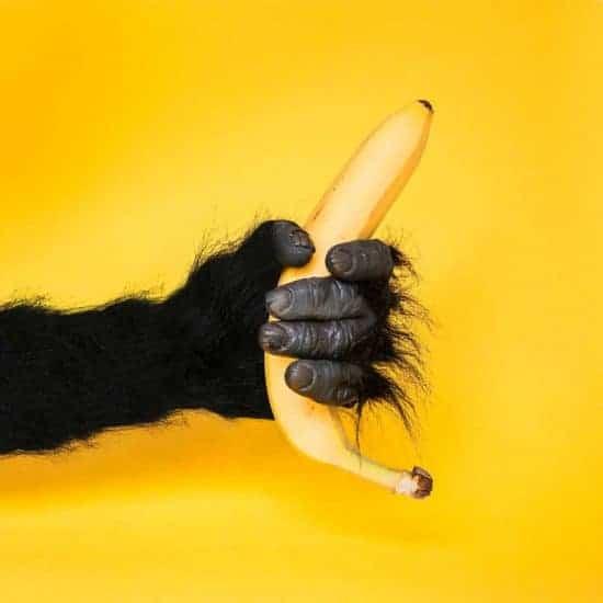 Monkey hand holds banana on yellow background