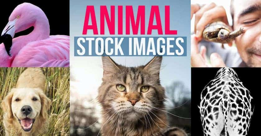 animal stock images > The Most Creative Uses for Animal Stock Photos