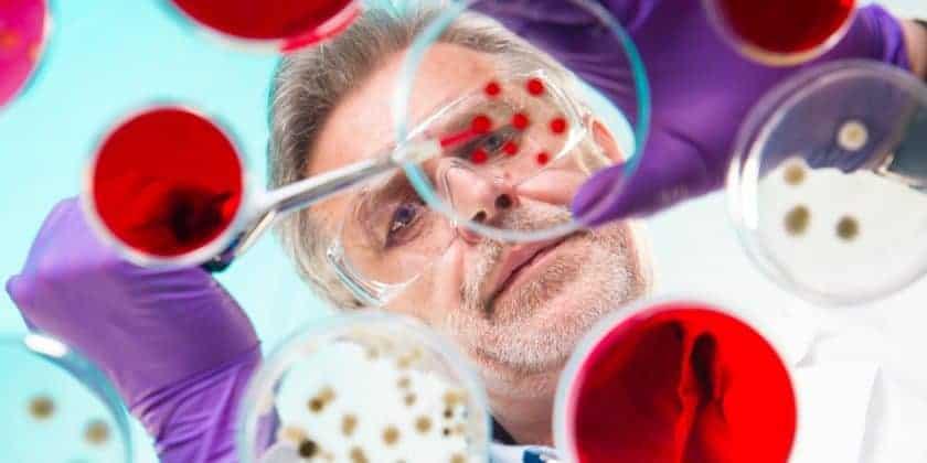 researcher grafting bacteria