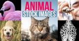 The Most Creative Uses for Animal Stock Photos